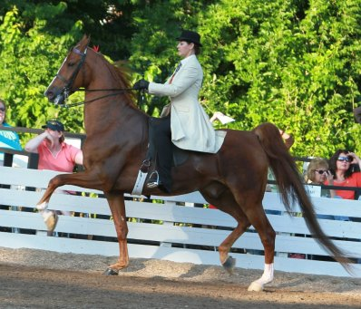"Kayla and ""Sport"" (KK Impetuous Son) showing at the Rock Creek Horse Show in 2012."